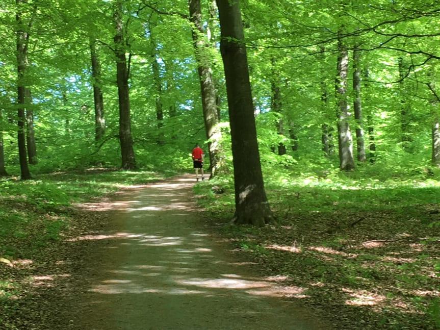 Torups bokskog blir naturreservat